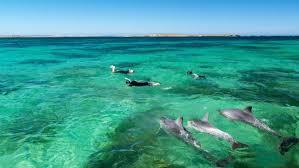 shark-fins-australia