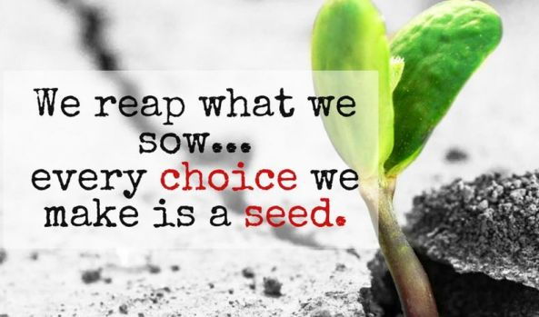 reap what we sow